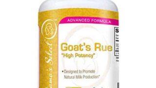 Organic Goat's Rue - Increase Breast Milk Supply